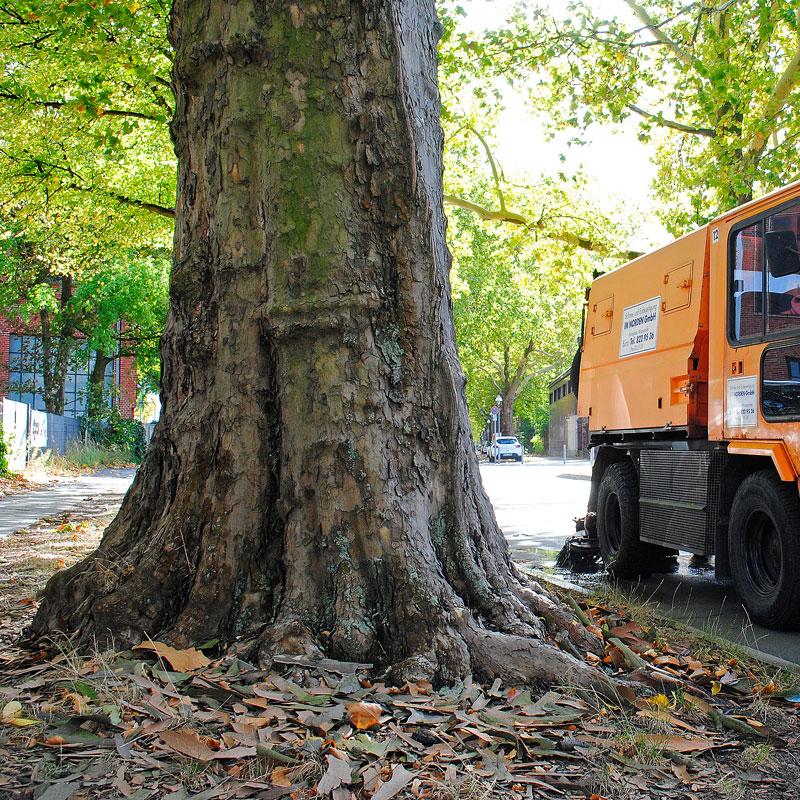 Bewässerung Strßenbäume Berlin IM NORDEN GmbH
